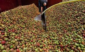 El sector sidrero lanza un plan estratégico para «detectar las deficiencias y oportunidades» del mercado