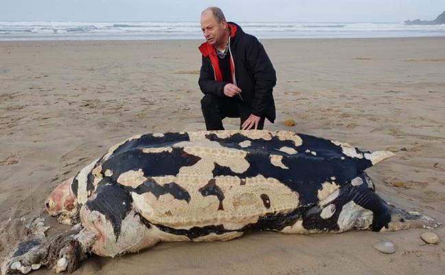 Aparece un ejemplar muerto de tortuga laúd en la playa de Xagó