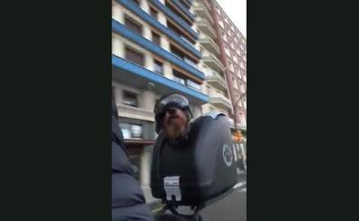 Tato, el simpático perro que pasea en moto por Gijón