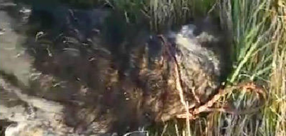 Aparece un perro muerto y con una soga al cuello en un bosque de Lugones