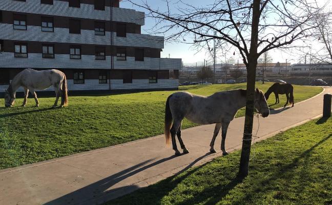 Varios caballos, de paseo por El Cerillero