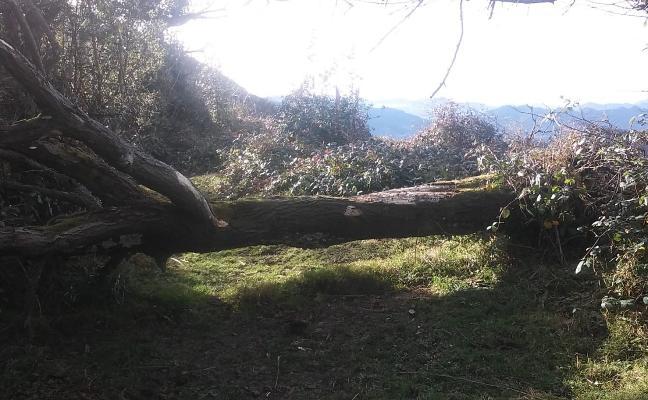 Critican la falta de mantenimiento de las sendas del Paisaje Protegido en Langreo