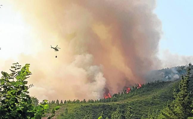 2018 fue el segundo año con menos superficie forestal quemada desde 1990