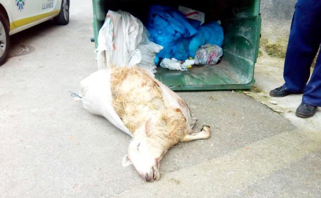 Inhabilitan a un joven de Porrúa para tener animales por maltratar a su ganado