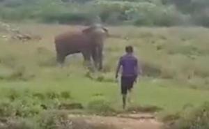 Fuertes imágenes: Un elefante mata a pisotones a un hombre que intentaba hipnotizarlo