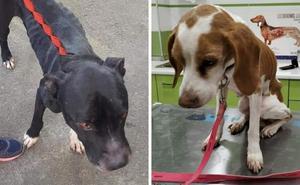 Rescatan a dos perros abandonados dos meses sin comida en Villanueva