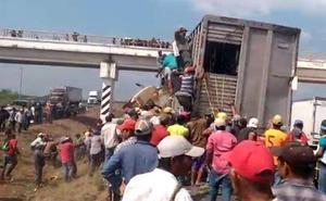 El asombroso robo de animales tras un accidente entre dos camiones en México