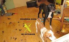 Denuncian a una vecina de Moreda por el abandono de dos perros