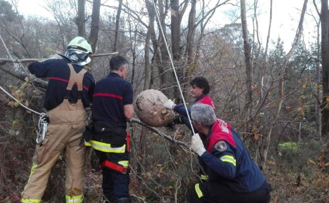 Los bomberos retiran un nido de avispa asiática