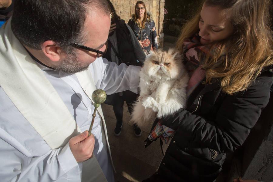 Llaranes, La Magdalena y la ermita de Taborneda bendicen animales domésticos por San Antón