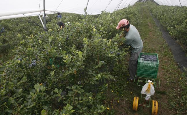 La compañía Asturian Berries entra en concurso de acreedores