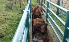 Investigan la brutal muerte a golpes de cuatro caballos en Galicia