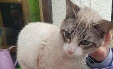 Se busca a los dueños de un pequeño gato rescatado en Trubia