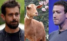 El día en que Zuckerberg mató una cabra y se la sirvió fría al fundador de Twitter