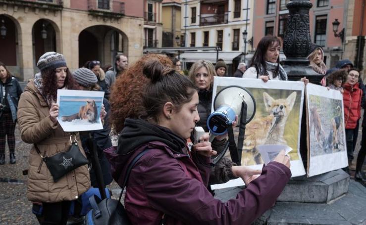 Concentración contra la caza de zorros en Gijón