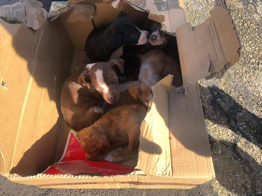 Una vecina de Langreo encuentra cinco cachorros abandonados en la puerta de su casa