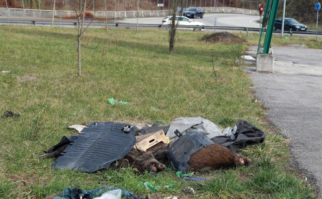 Varios jabalíes muertos «llevan días tirados» junto al silo de sal de Frieres