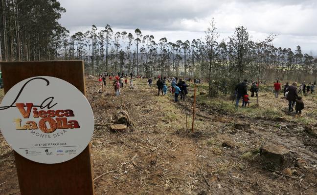 Los niños recuperaron el bosque de Viesca la Olla con 800 árboles autóctonos