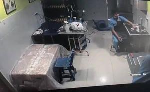 Cazado in fraganti el veterinario que maltrataba a un perro