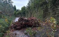 Rachas de 121 kilómetros por hora tumban árboles y cierran parte de Feve