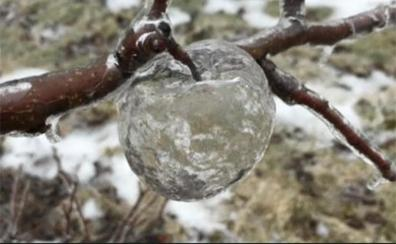 El curioso fenómeno tras las «manzanas fantasma» de Michigan