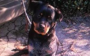 Un perro de raza peligrosa escapado moviliza a Policía y Guardia Civil