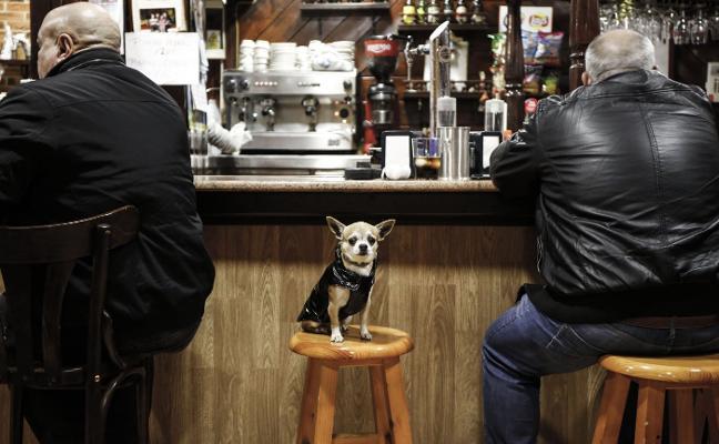 El censo de perros se dispara a 163.600 canes y supera ya al de bebés, niños y adolescentes