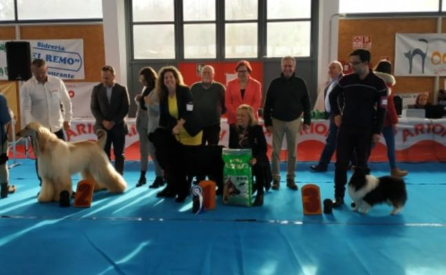 Más de cien perros se midieron en el Concurso Nacional de Cudillero