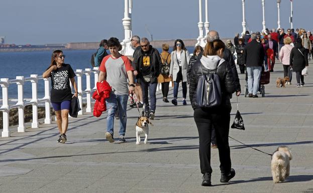 Asturias Vive La Primavera En Pleno Febrero El Comercio