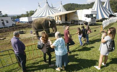 Asturias prohibirá los circos con animales, pero no los espectáculos taurinos
