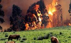 Incendios en Asturias   300 efectivos y 7 aeronaves luchan contra 50 incendios en Asturias