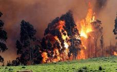 Incendios en Asturias: Tolerancia cero ante la oleada de incendios provocados