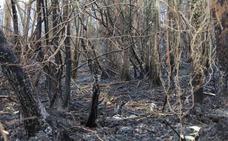 Incendios en Asturias: El trabajo de los bomberos y la lluvia reduce a siete los incendios