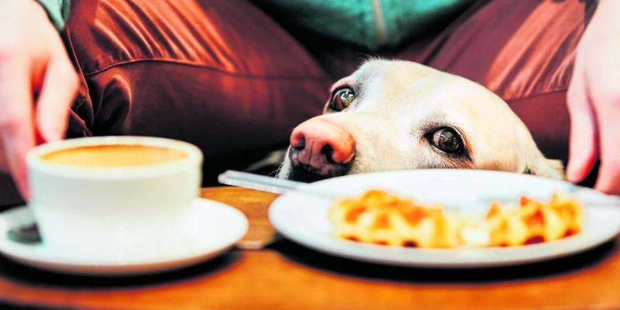 Restaurantes dogfriendly en Gijón