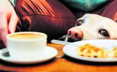 Los veterinarios recuerdan que la ley no permite mascotas en restaurantes