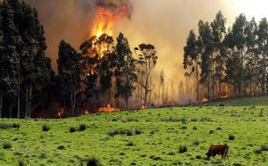 La Coordinadora Ecoloxista pide a Bruselas que investigue si las zonas quemadas en Asturias reciben ayudas de la PAC