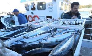 La costera de la xarda arranca hoy para la flota artesanal con un recorte de la cuota del 20%