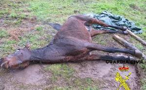Deja agonizar a su caballo en Pravia porque estaba enfermo