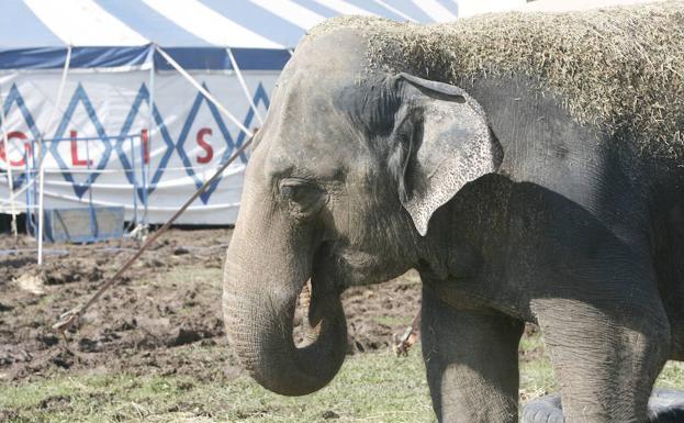 La Junta aprueba por unanimidad prohibir los circos con animales