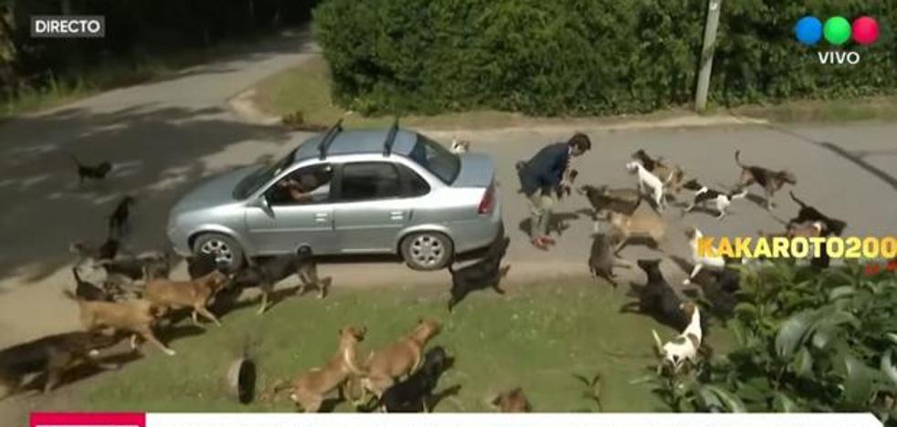Una jauría de perros ataca a un periodista en directo