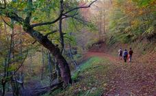 Diez bosques para perderse en asturias