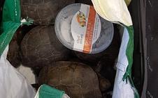 Descubren 19 tortugas dentro de una maleta en Toledo