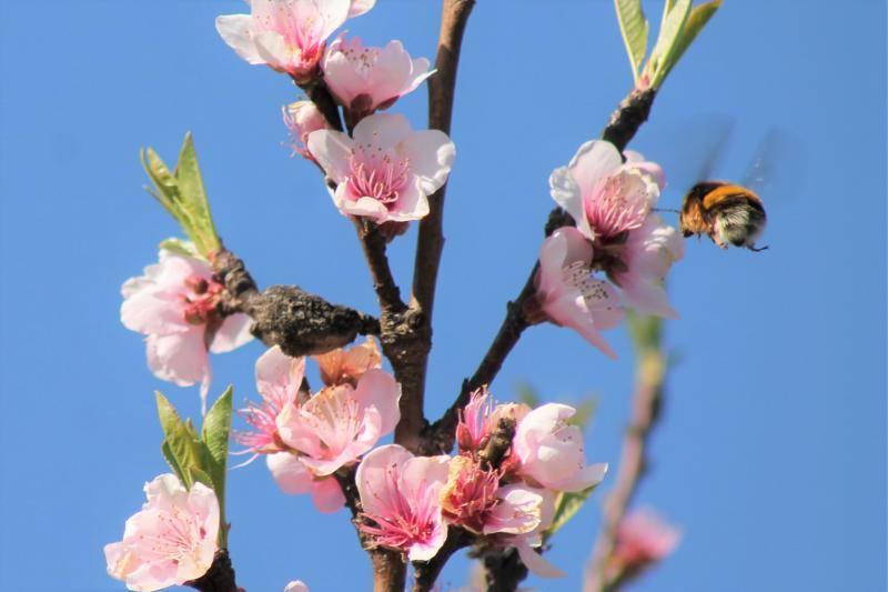 La primavera florece en Asturias