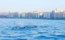 Surfeando con delfines en la playa de San Lorenzo