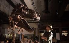 Scotty, el tiranosaurio más grande de la historia