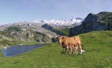 Cangas de Onís, todas las virtudes de Asturias en un municipio único