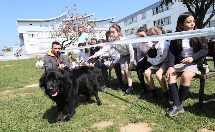 Charla sobre perros en el colegio Palacio de Granda