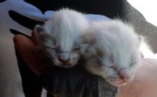 Rescatan a dos gatos que arrojaron en una bolsa al río Naredo en Lena