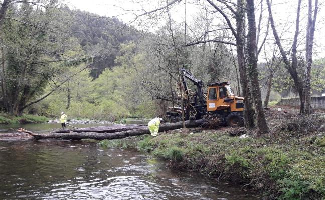 La Confederación Hidrográfica limpia el cauce del Esva