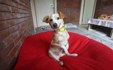 Buscan un hogar para 'Clarita', una perra desvalida que fue abandonada en Oviedo